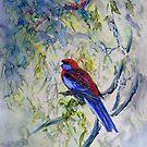 Crimson Rosellas  by Ryn  Shell