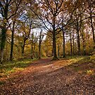 The Woods In Autumn by Dave Godden
