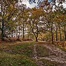 Track Through The Forest In Autumn by Dave Godden