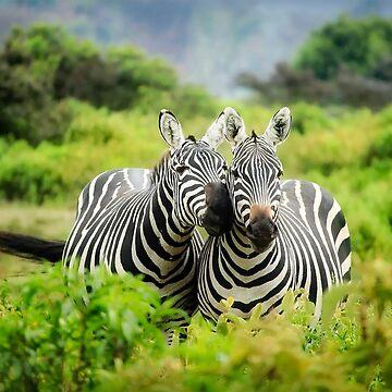 Zebra Couple Nuzzling with Love by YLArt