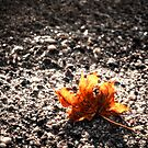 Sole Survivor Stranded Maple Leaf by Demoshane