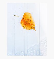Leaf on white with water Photographic Print