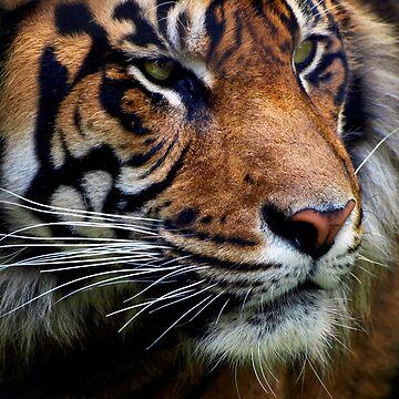 Sumatran Tiger Wildlife Big Cat-Lover by NaturePrints
