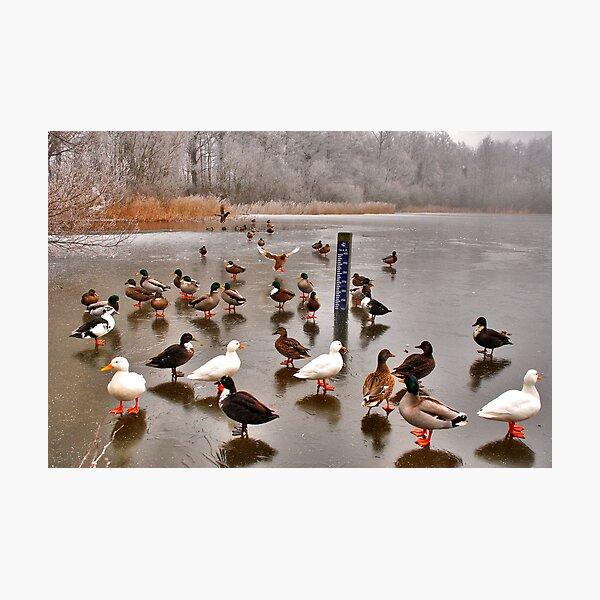 Skating ducks..... Photographic Print