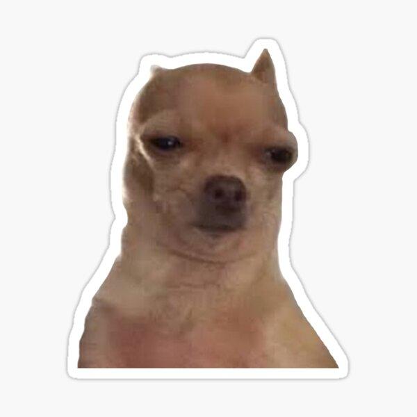 Chihuahua molesto Doggo Pegatina