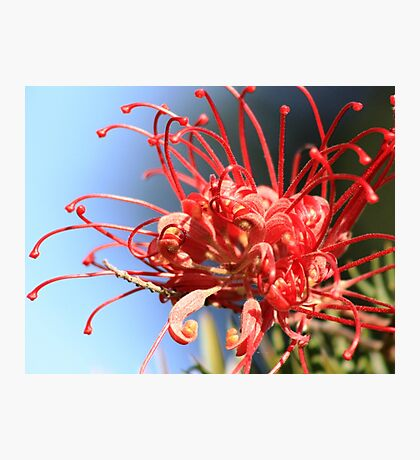 Red Spikes Photographic Print