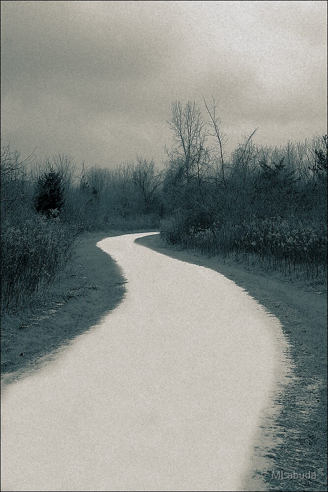 The winter lane  A Split Toned Photograph  by MLabuda