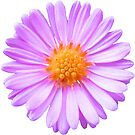 wunderschöne, pinke Blume, Blüte, pink, Sommer von rhnaturestyles
