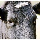 Cow's Face by Leon Woods