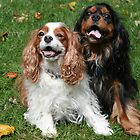 Ain't Life Great! Cavalier King Charles Spaniels by daphsam