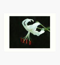 Flaming Stamen Art Print