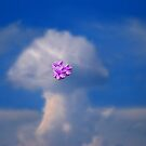 Clouds Above by laureenr