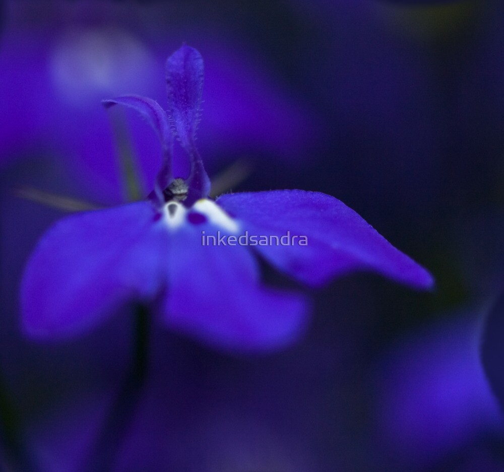 Bluer than blue by inkedsandra