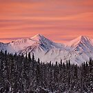 Yukon Winter by Marty Samis