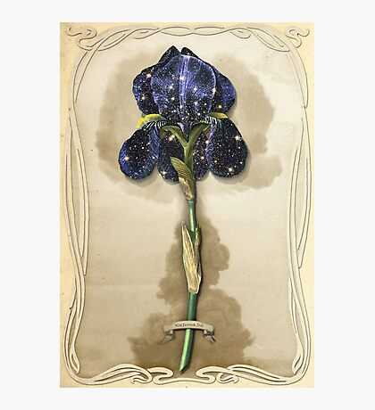 Night Iris Photographic Print