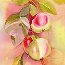 Apple Tree Branch Watercolor by Judy Boyle