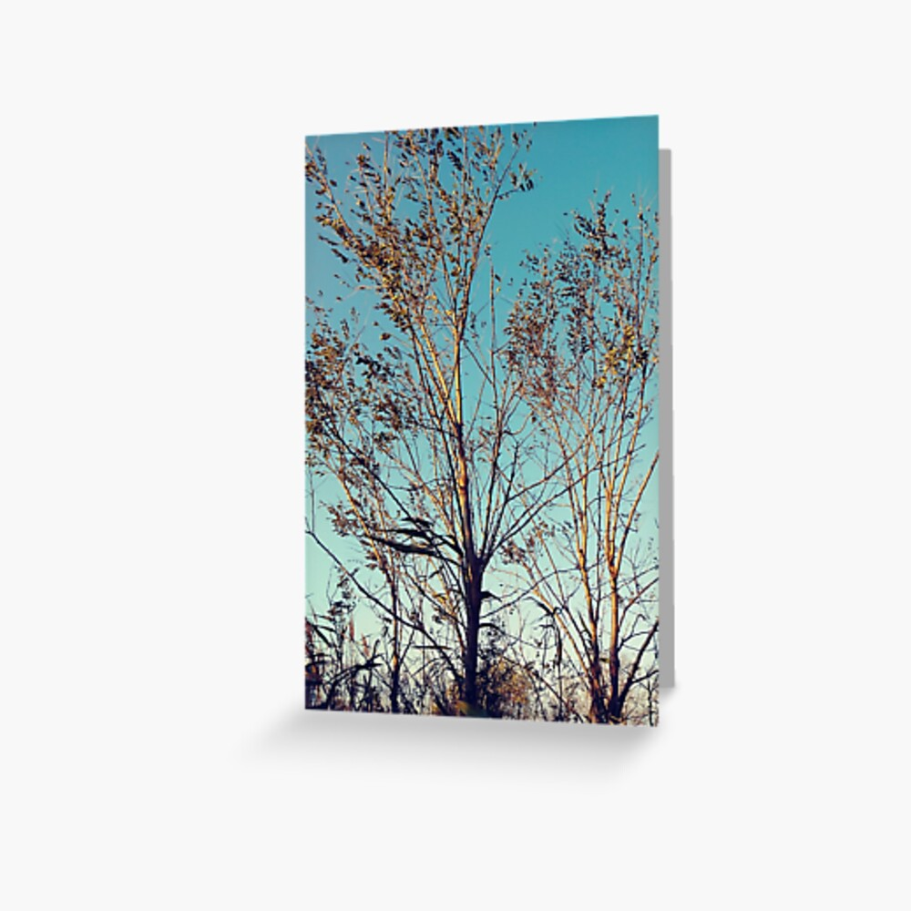 #tree #wood #nature #landscape #outdoors #season #leaf #snow #tallest #sky #weather #cold #horizontal #colorimage #nopeople #branchplantpart #plantbark #day #naturalparkland #publicpark #ruralscene Greeting Card