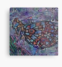 Lepidoptera 4 Metal Print