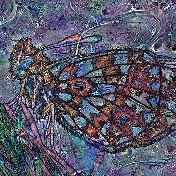 Lepidoptera 4 by RichardMaier