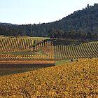 Golden Vines by Joy Watson
