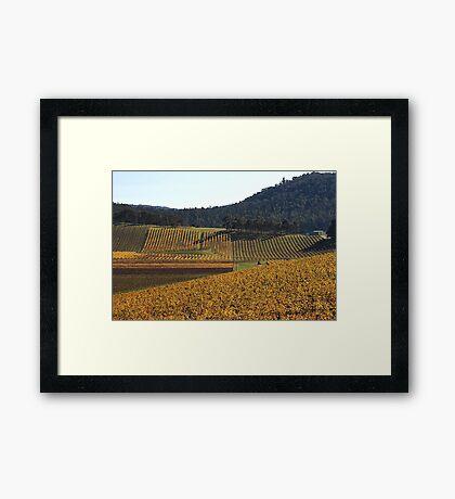 Golden Vines Framed Print