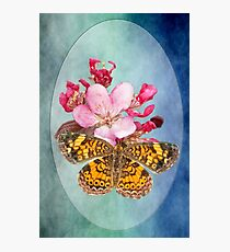 Pearl Crescent Butterfly on Crab Apple Blossom Photographic Print