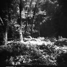 Three Trees (Angeles National Forest) by joshsteich