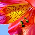 Orange Day Lily by Jessica Manelis