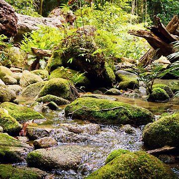 High altitude rainforest mountain stream  by Bellamaree
