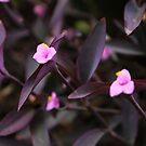Blume von laura-S