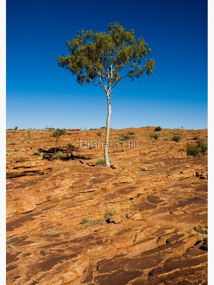 Lone Tree - Kings Canyon by dilshara
