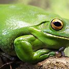 Green Tree Frog by Kelly Robinson