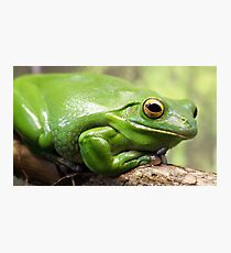 Green Tree Frog Fotodruck