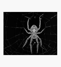 A spider in the web Photographic Print