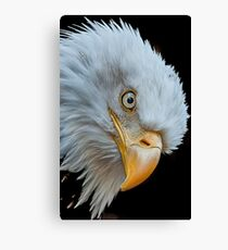 The Eye of The Eagle Canvas Print