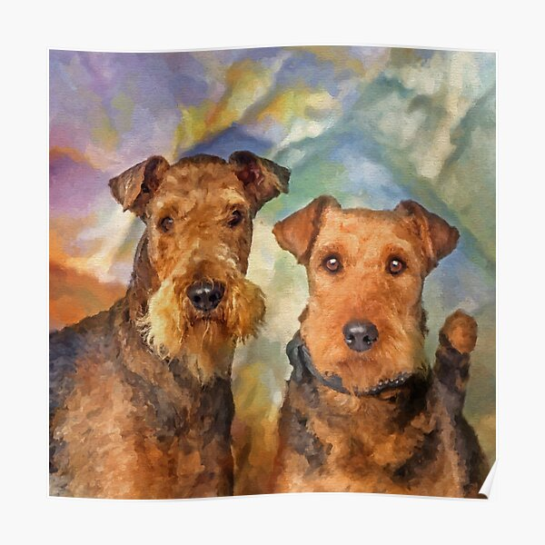 Airedale Terriers Portrait Mixed Media  Poster