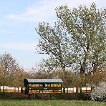 Bee hives on green field landscape spring season by goceris