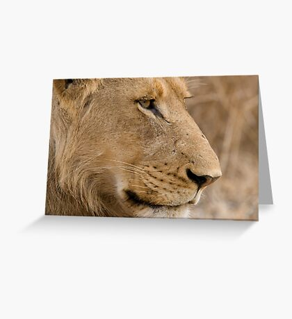 Young Male Lion  Greeting Card