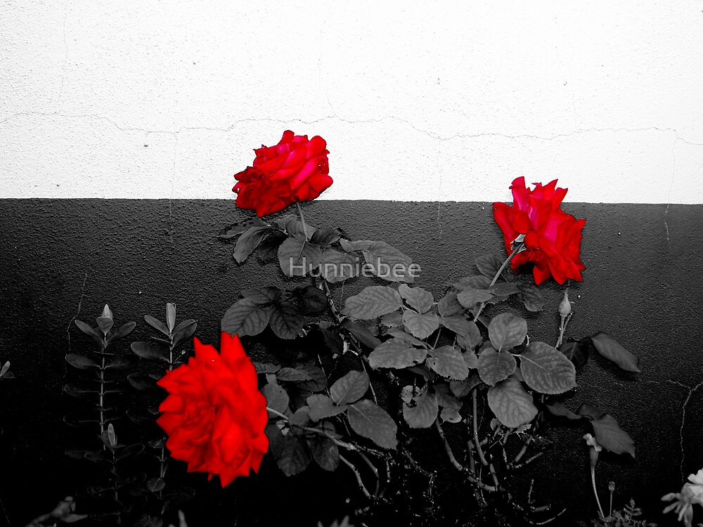 Red Roses by Hunniebee