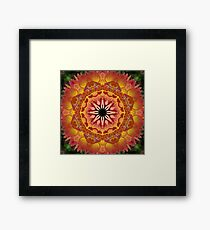 Apricot and peach dahlia mandala Framed Print