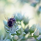 Buzzing About by imaginethis