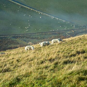 Sheep Moorfoot Hills (1) by procrest
