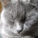 Lovely cat. by Vitta