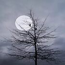 Moonlit Musings... by Nina Toulmin