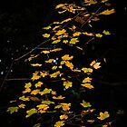 Lovely leaves by Ralph Goldsmith