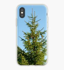 Close up of a pine tree with pinecones on a blue sky background. Photographed in Stubaital, Tyrol, Austria  iPhone Case