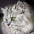 Colorful Lovely White Cat by TerryIKON
