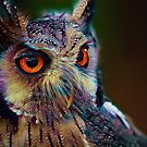 Colorful Owl by TerryIKON