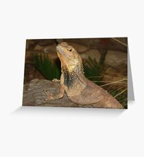 Frilled Neck Lizard, Territory Wildllife Park Greeting Card