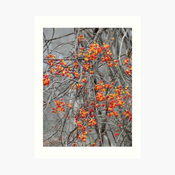 In a Woburn Field Art Print